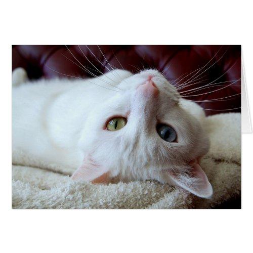 Turkish Angora Cat Odd Eyes Card card