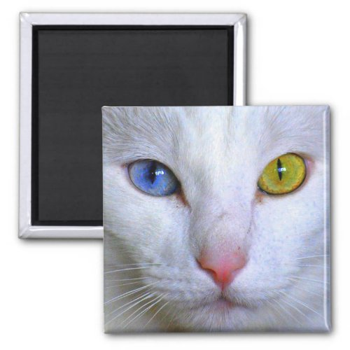 Turkish Angora Cat Odd Eyes Magnet magnet