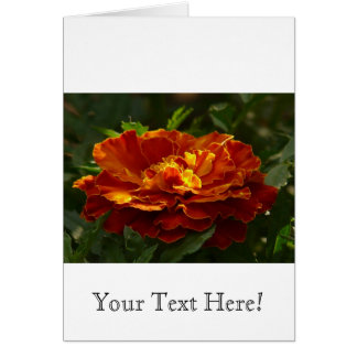 Turkish Marigold Greeting Cards