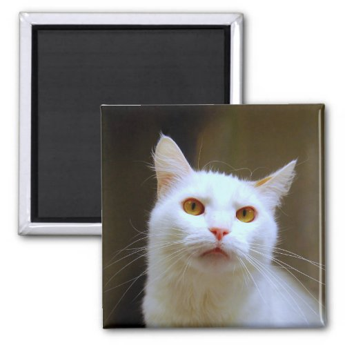Turkish Van Cat Magnet magnet