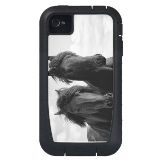 Two Friesian stallions. Case-Mate iPhone 4 Covers