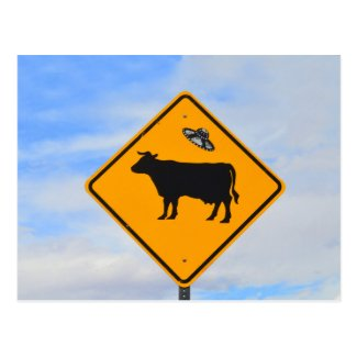 UFO Cattle Crossing Sign in New Mexico Postcards