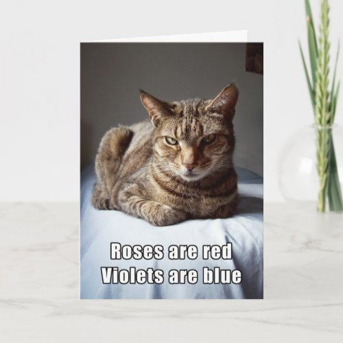Valentine Cat funny poem Holiday Card