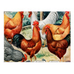 Chickens For Sale Vintage Catalogue Ad Postcard