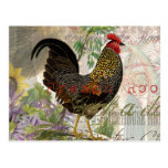 Vintage Rooster French Collage Postcard