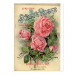 ❤️ Vintage Pink Rose Postcard