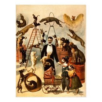 Vintage Trained Circus Dog Act Trick Dogs1899 Postcard