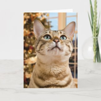 Christmas Card on Zazzle featuring lovely Bengal kitten