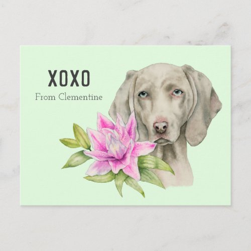 Weimaraner Dog XOXO | Valentine's Holiday Postcard