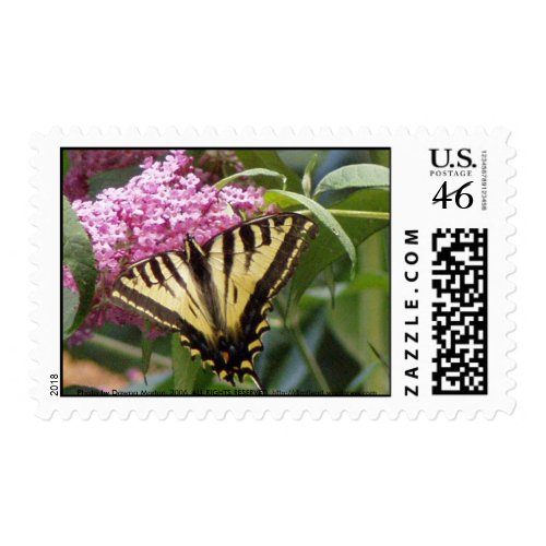 Western Tiger Swallowtail butterfly on pink lilacs stamp