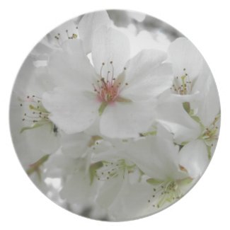 White Cherry Blossoms Sakura Flowers Floral Photo