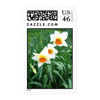 White daffodils zazzle_stamp