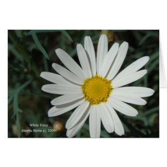 White Daisy Card card
