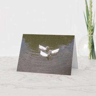 White Ducks Swimming Card card