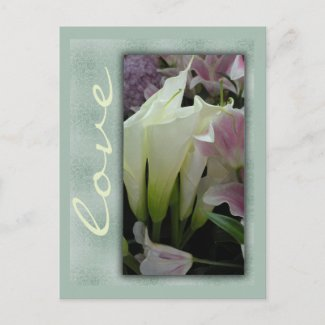 White lily love postcard