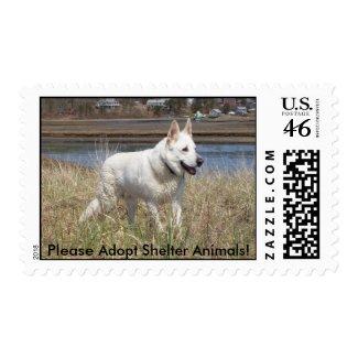 White Shepherd - adoption stamp stamp
