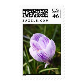 White violet crocus zazzle_stamp