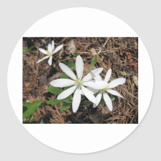 White Woodland Flower Sticker