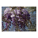Wysteria Cluster Posters