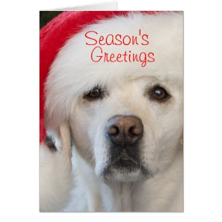 Yellow lab in Santa hat Christmas card