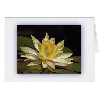 Yellow Lotus Cards