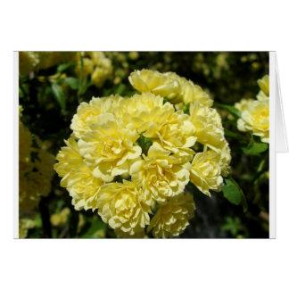 Yellow Rose Bush Card