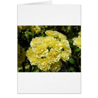 Yellow Rose Bush Greeting Card