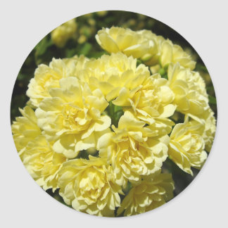 Yellow Rose Bush Stickers