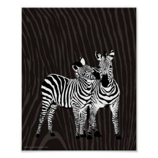 Zebra Play Poster Print