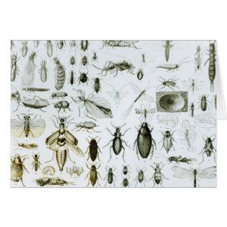 Resultado de imagen de Entomología