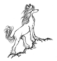 Chinese Crested drawing DD LaRue