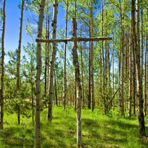 A cross made of birch logs standing in a sunlit forest of birch trees.