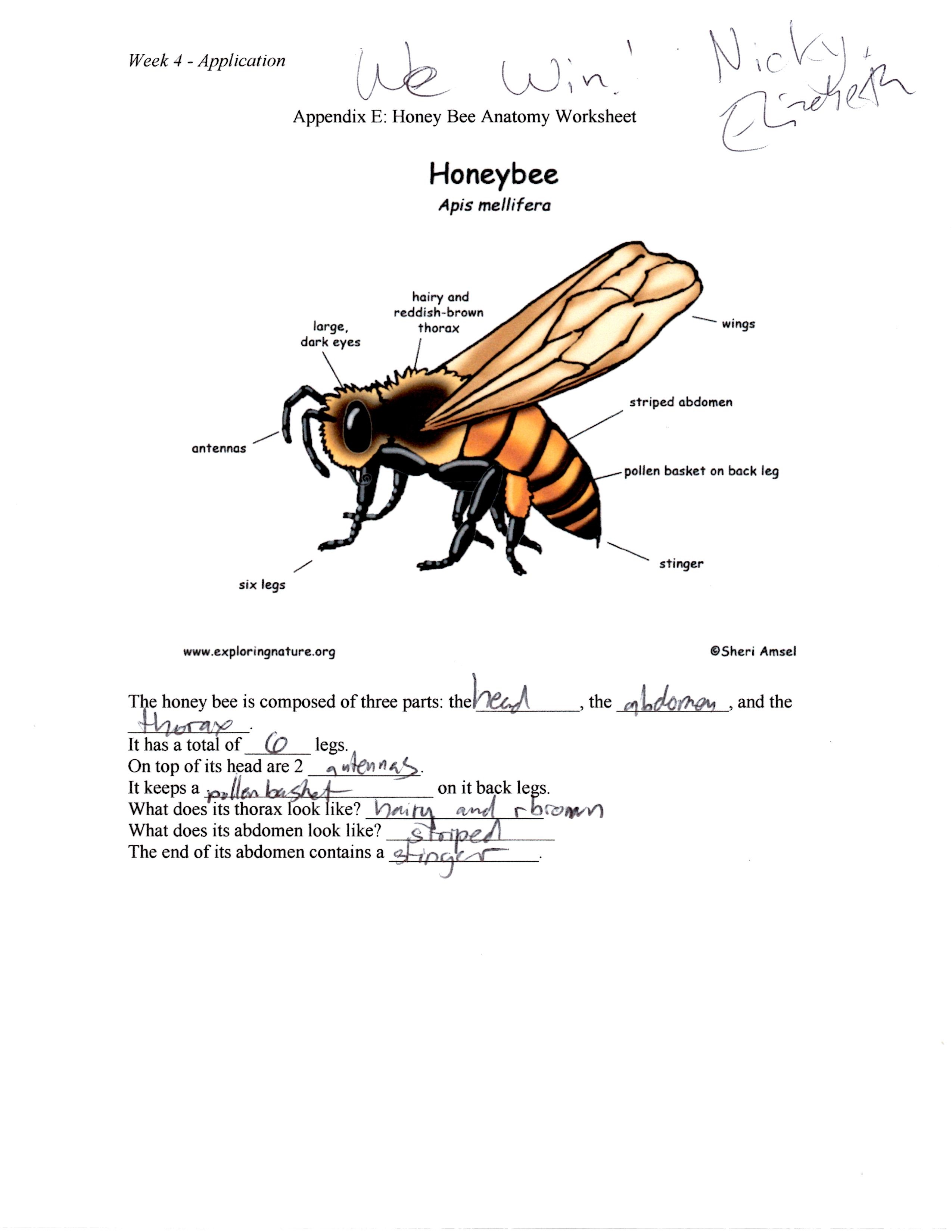 A Buzzy Time With My Family Implementing A Backwards Lesson Plan On Bees