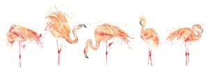 flamingo line