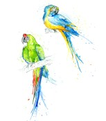 macaws2amyholliday