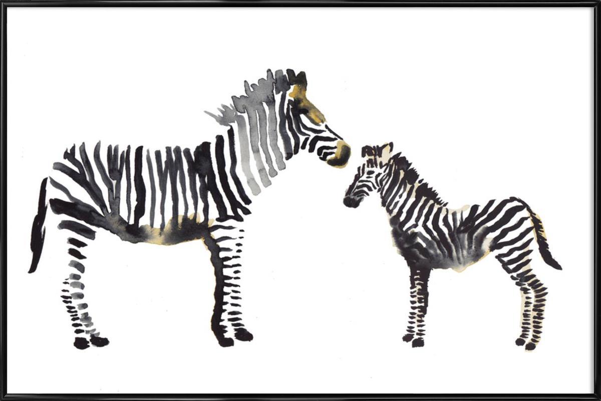 Zebra Poster In Standard Frame