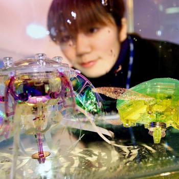 Japanese toy giant Takara employee Hiromi Iwase gazes at jellyfish (L) and turtle-shaped pet robots, Aquaroids, powered by penlight batteries, in a fish tank in Tokyo 28 February 2001.  Takara started to sell similar solar-powered robot pets last year with a price of 100,000 yen (852 USD) and will put the new robots on the market next month with a price of 4,980 yen (43 USD).    AFP PHOTO/Yoshikazu TSUNO (Photo by YOSHIKAZU TSUNO / AFP)