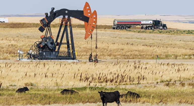 texas-vacas-petroleo