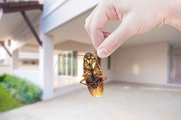 Bye Roach