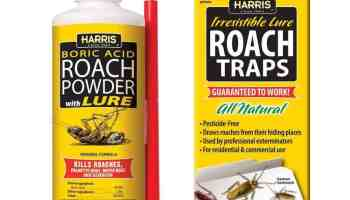 Best Roach killer powder