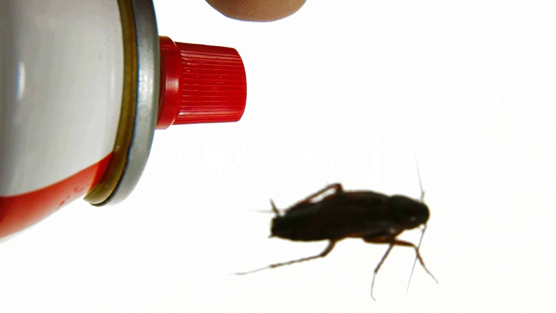 Roach Killer Spray