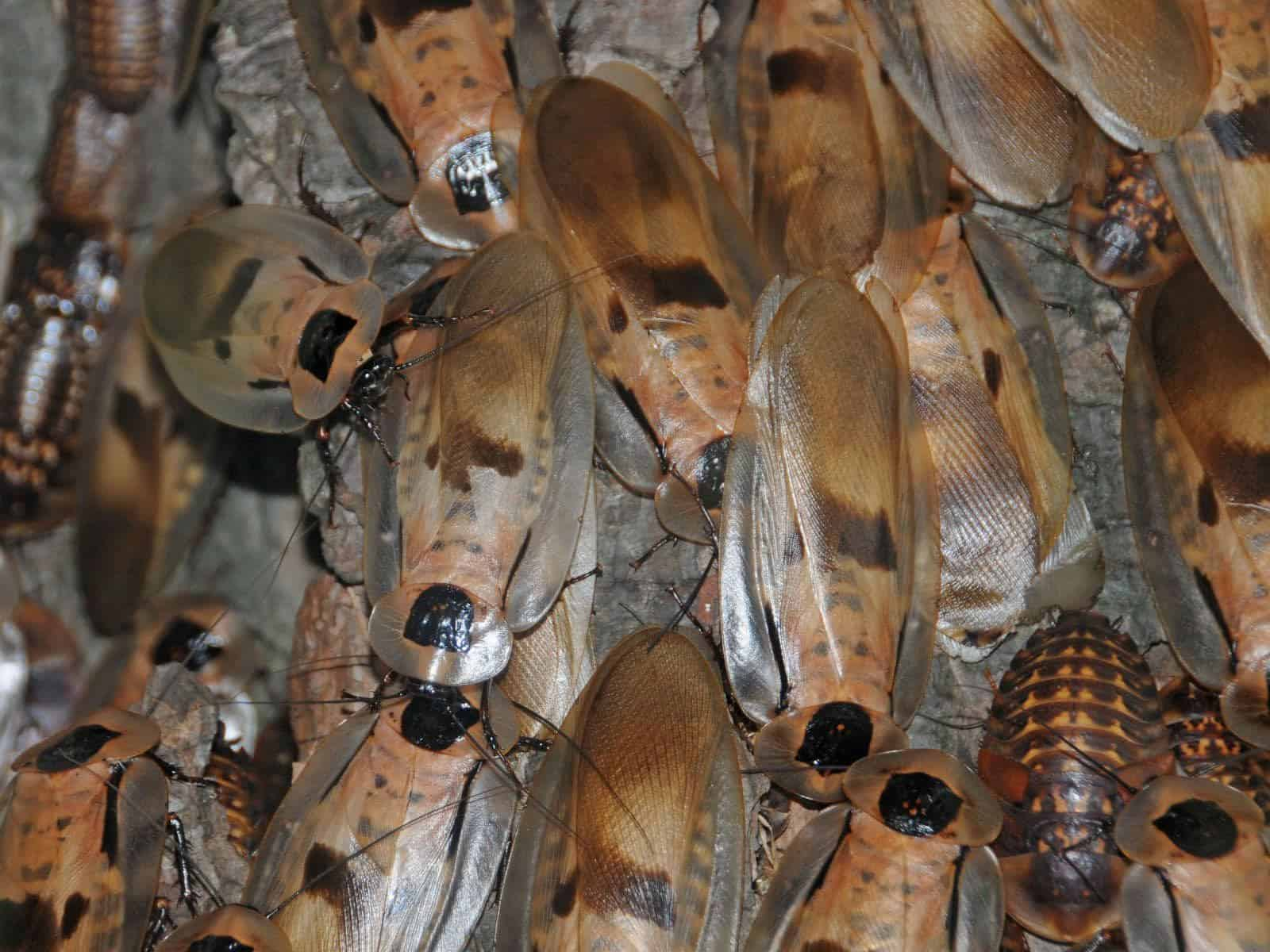 Baby cockroaches