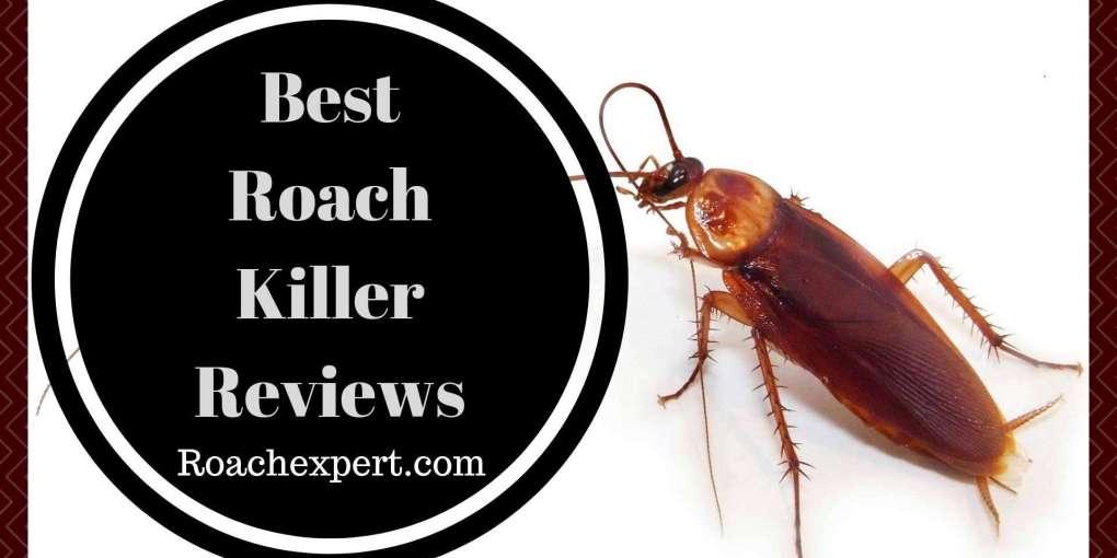 Best Roach Killer Reviews