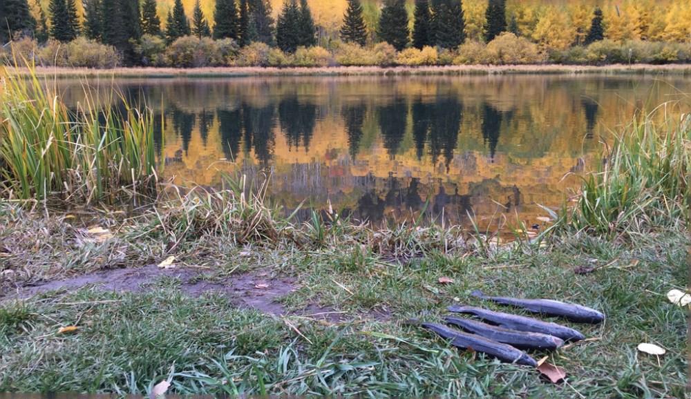 warner-lake-fische