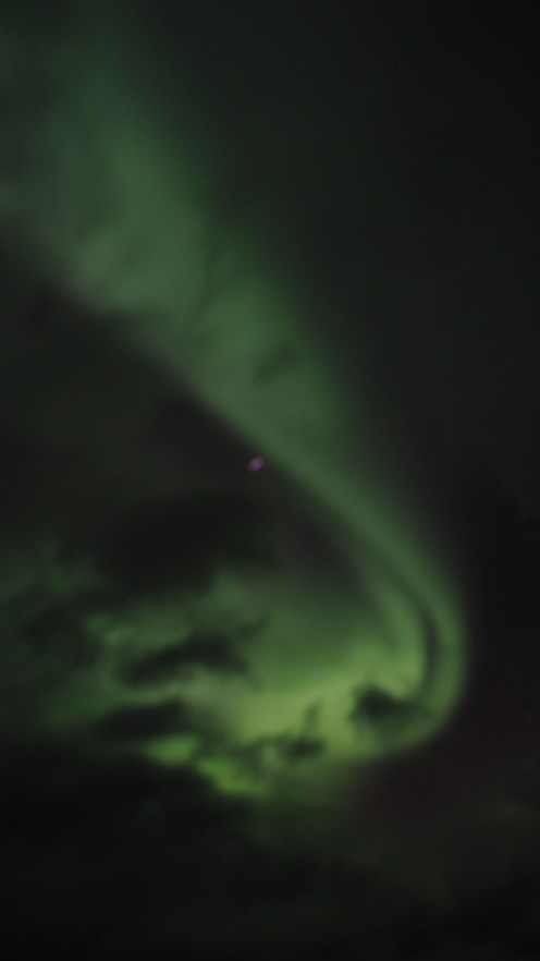 Polarlichter gesehen auf der MS Polarlys