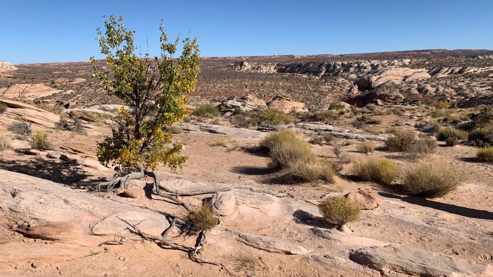 Horseshoe Canyon Trail