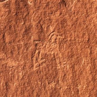 Kleines-Bighorn-Sheep