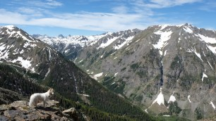 Taz admiring the gorgeous view of the Rocky Mountains.