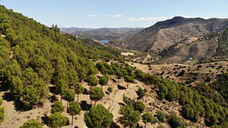 Sierra de Los Puntales