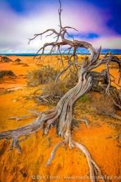 Desert Decay